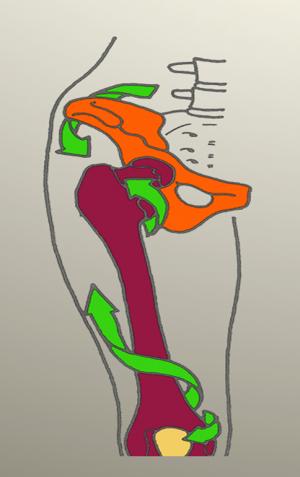 MRP fémur, pelvis y articulación coxofemoral